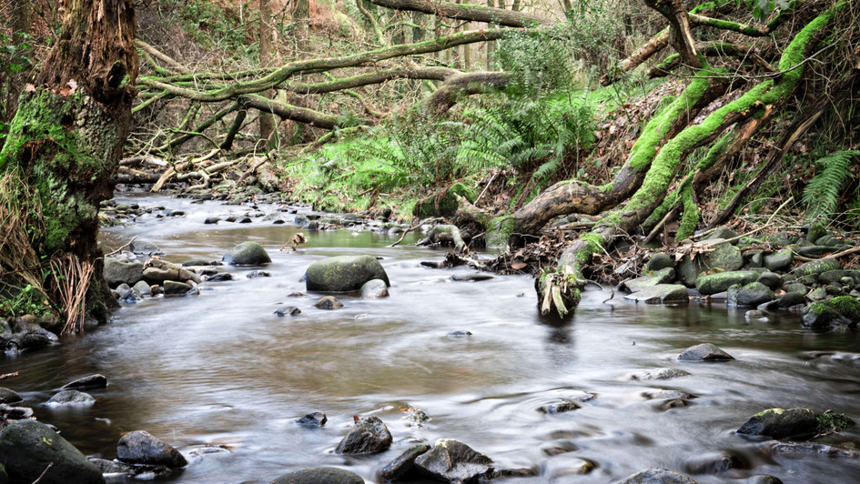 'By the stream'