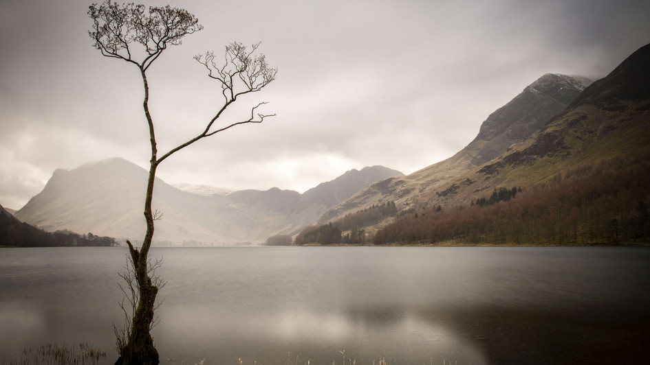 'Lonely Tree'