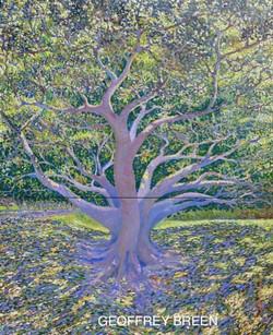 GEOFFERY BREEN thumbnail_Fig Tree Centennial Park copy