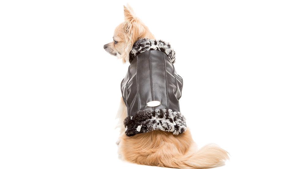 Neapolitan Dog Coat