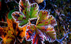 nature_winter_snow_red_leaves_frost_grass_autumn_background_free