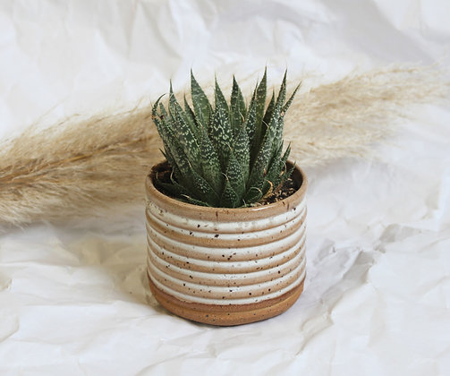 Frosted Ridge Planter