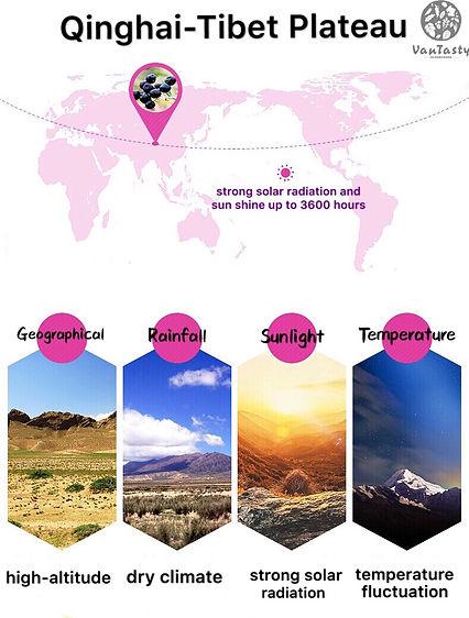 Qinghai-Tibet Plataeu