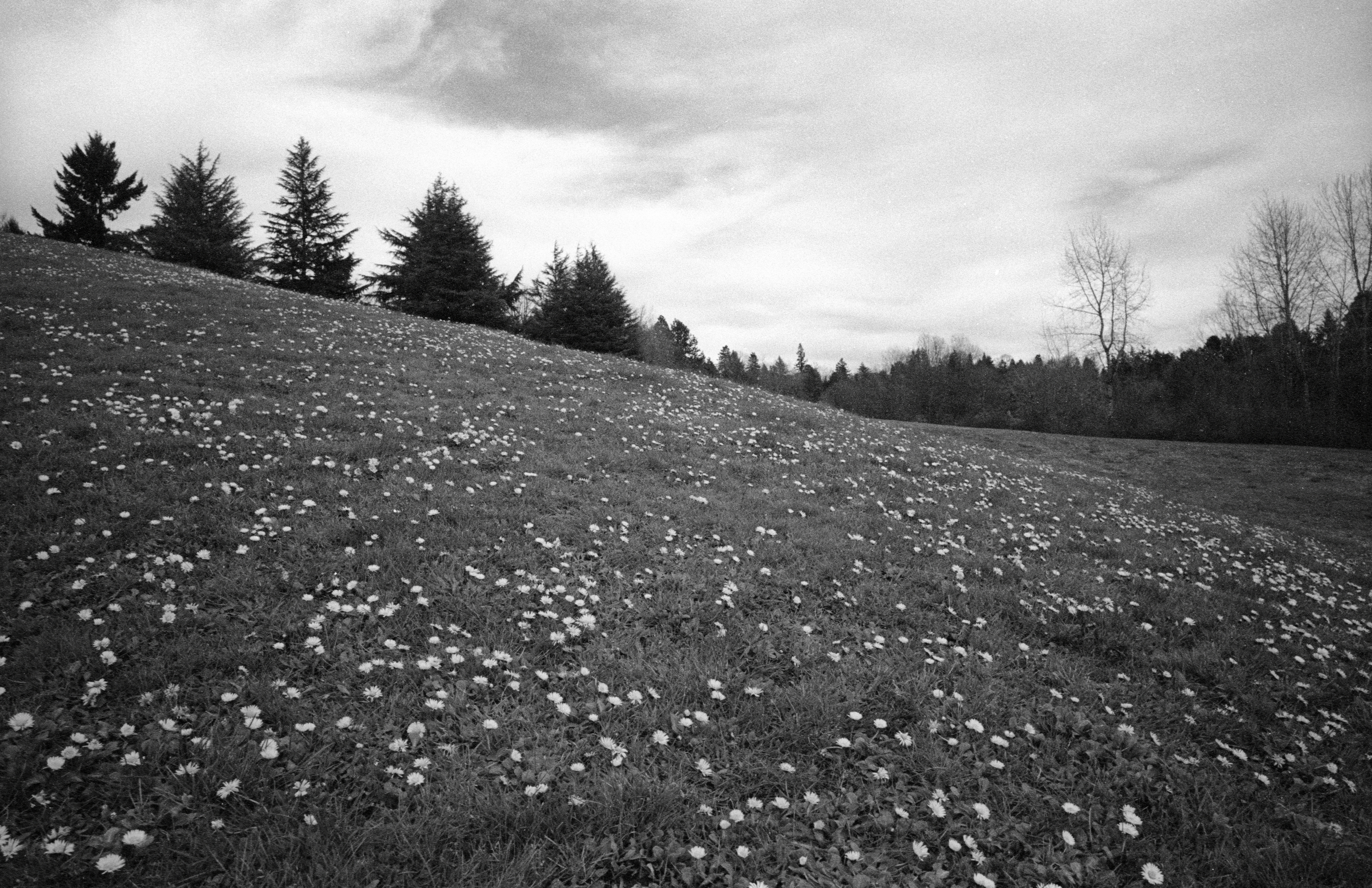 Flowers on the Hills