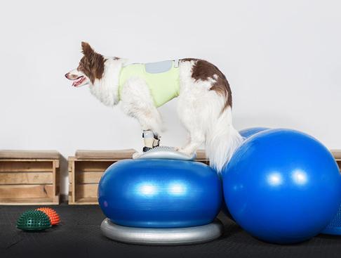 Pallérozd a kutyád elméjét fitnesszel