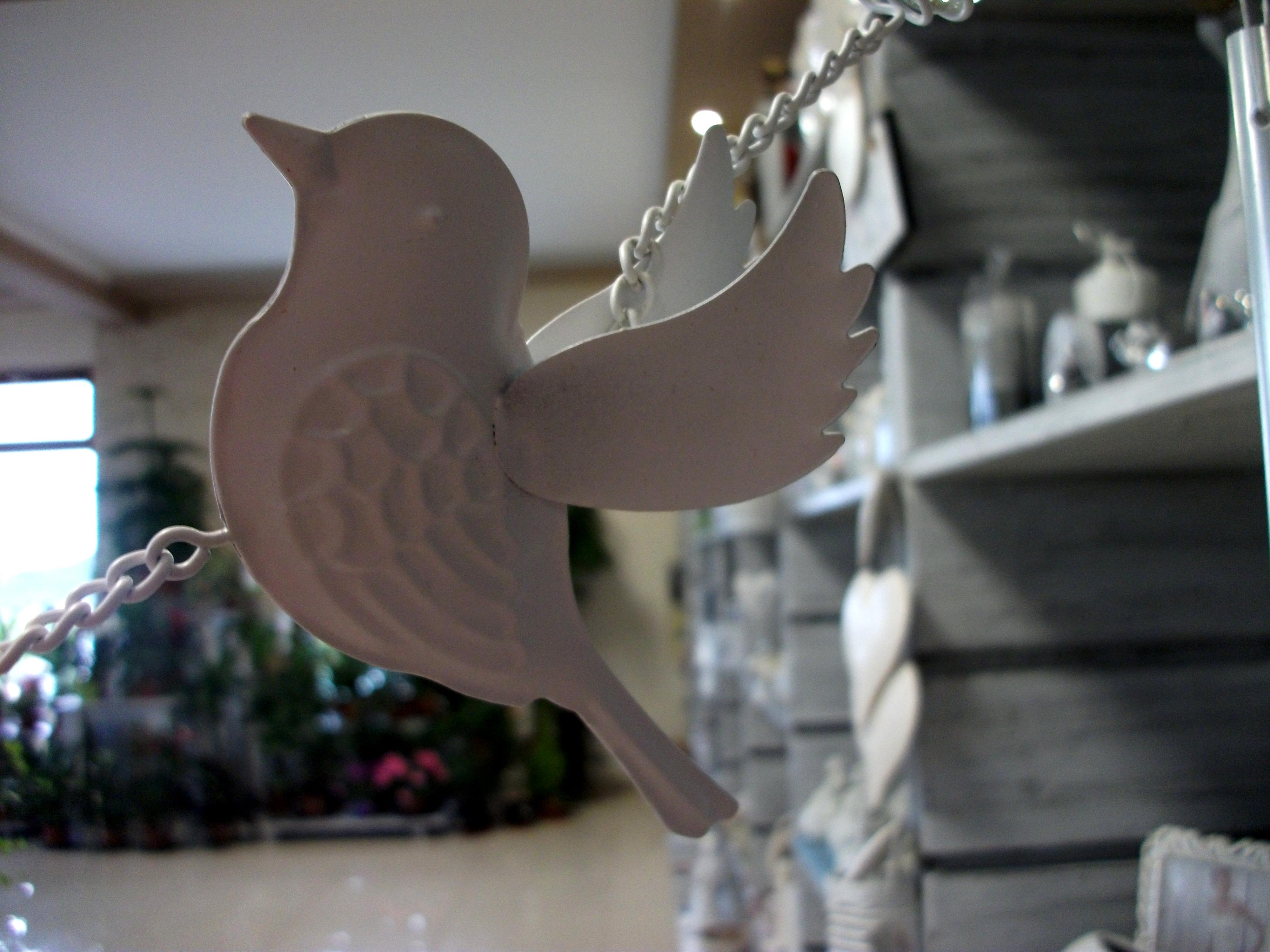 ptak.JPG