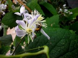 pszczoła.JPG
