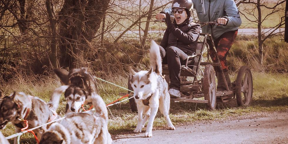 Schlittenhundefahrt