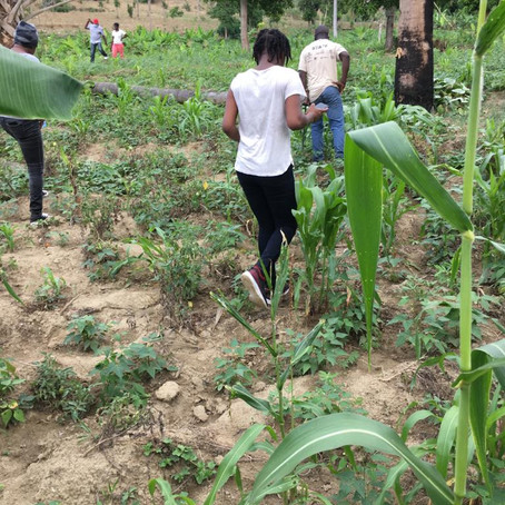 LIDE-N appuie le secteur agricole à Jean Rabel