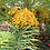 Thumbnail: Phoenix sylvestris seeds