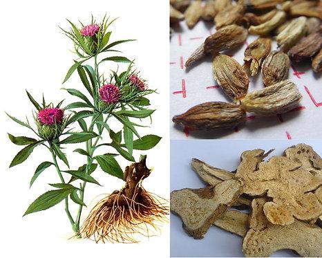 Atractylodes macrocephala seeds