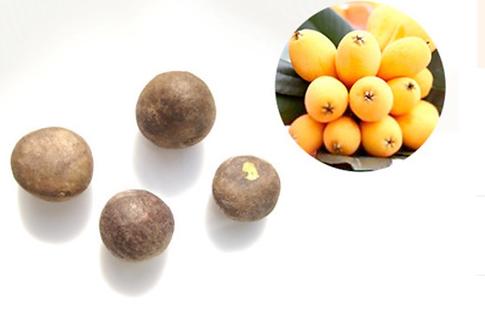 loquat seeds (Eriobotrya japonica)