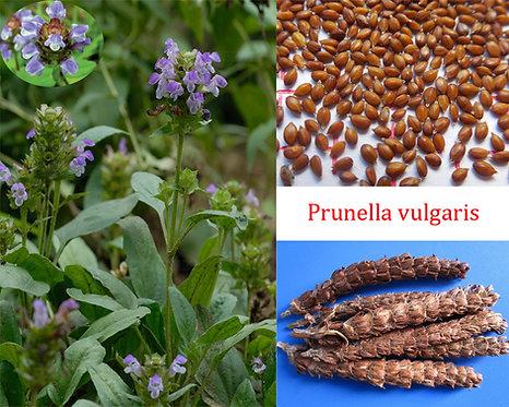 Prunella vulgaris seeds