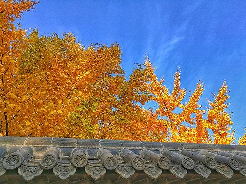 Quercus Linn