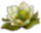 Fynbos Flower Illustration