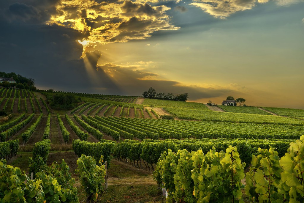 SOUTH AFRICA, CAPE WINELANDS