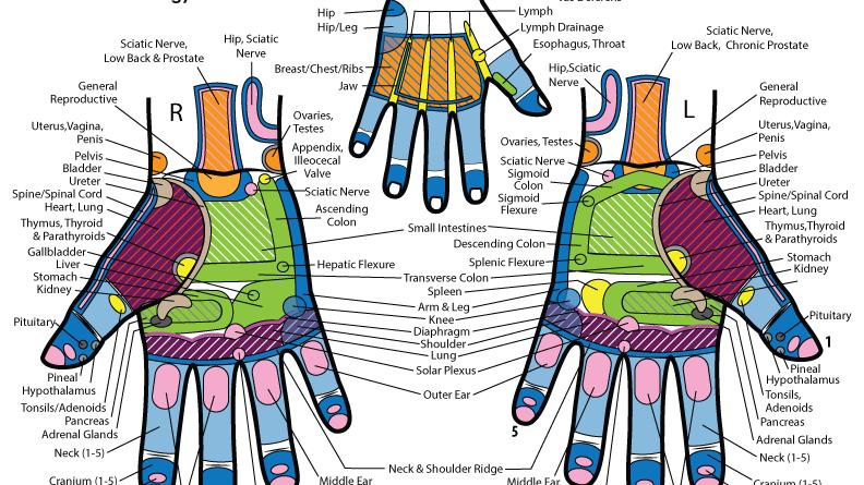 Practitioner Hand Reflexes Chart