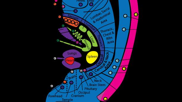 Ear Reflexes Chart