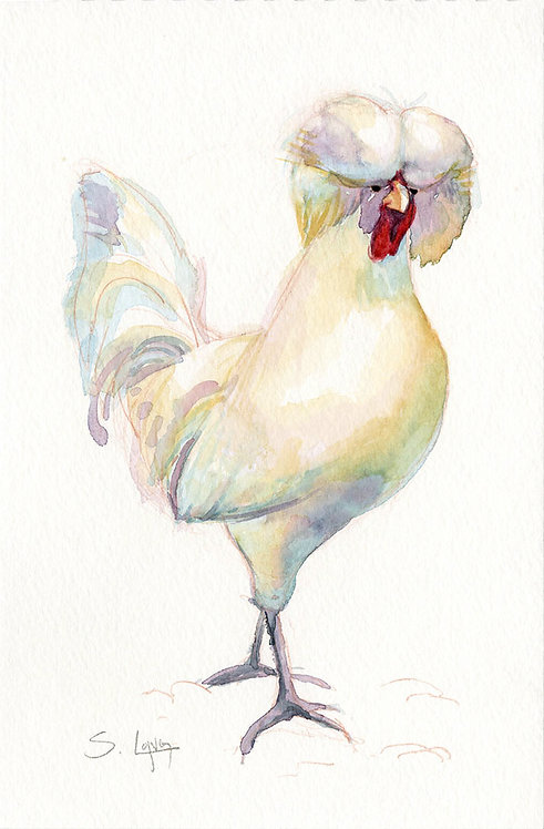 Leghorn Rooster Original Watercolor Sketch