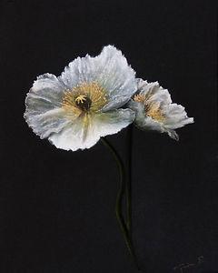 anemone_1.jpg