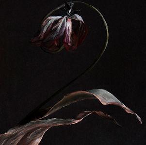 tulip old.jpg