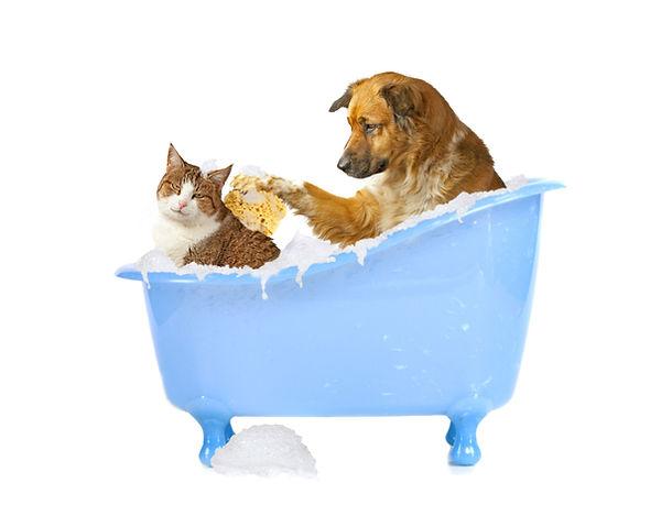 Cat and Dog bath.jpg