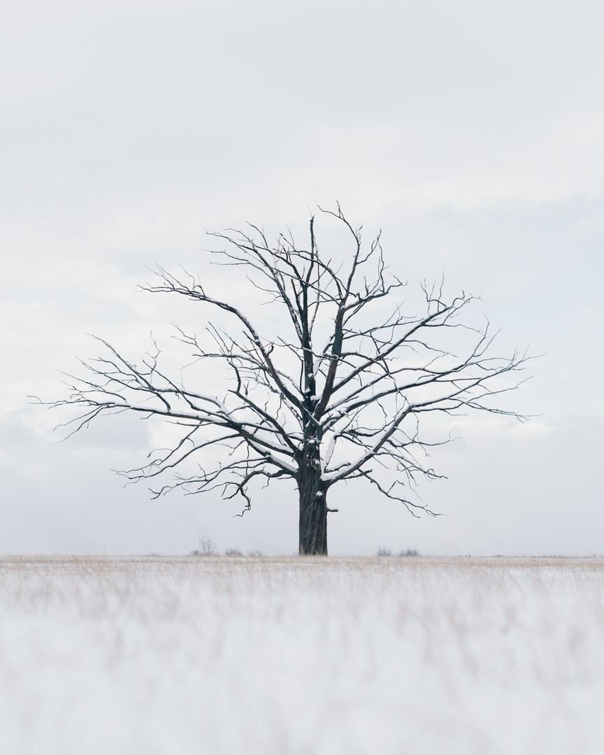 Tree Isolation.jpg