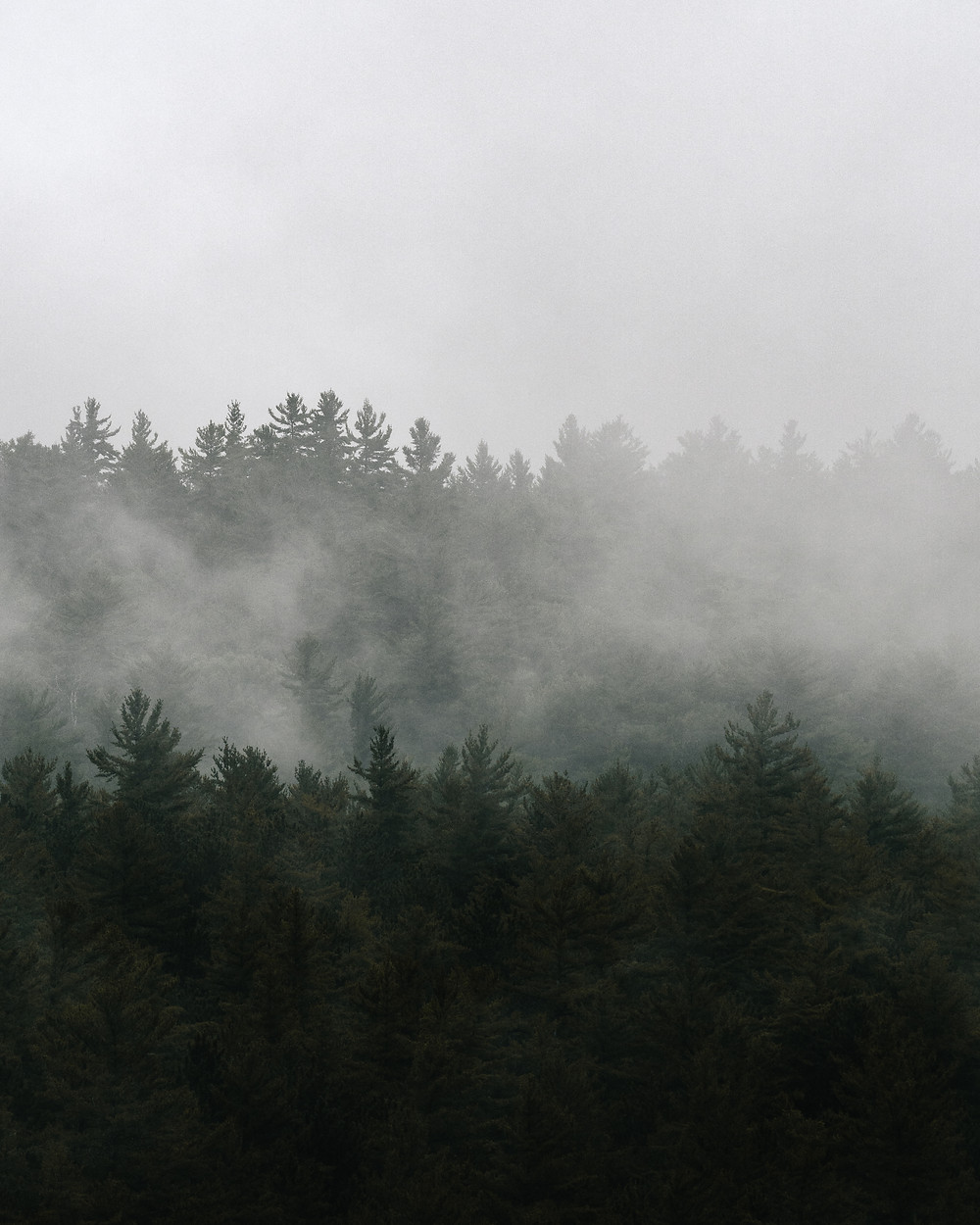 camping backcountry Algonquin lifestyle photography foggy treetops pinetrees forest michael frymus mfvisuals.ca