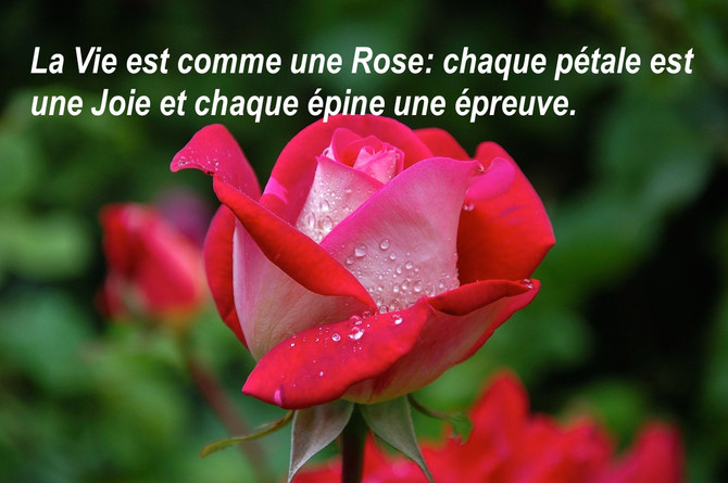 La Vie est comme une rose