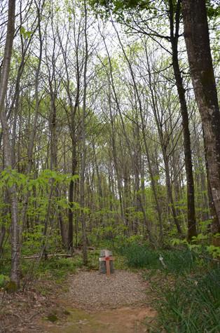 Forêt Saint Sauvant