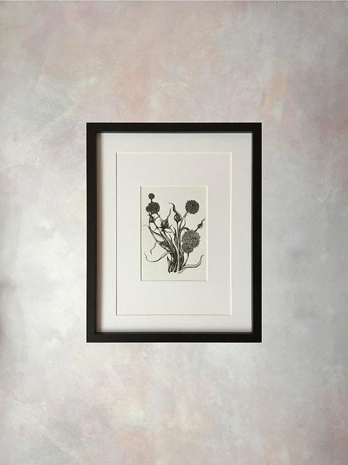 Original botanical ink study, no.iv