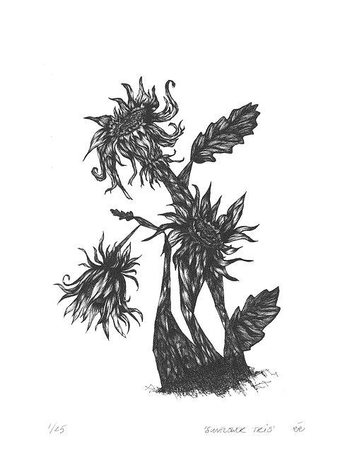 Limited Edition Botanical Print, 'Sunflower Trio'
