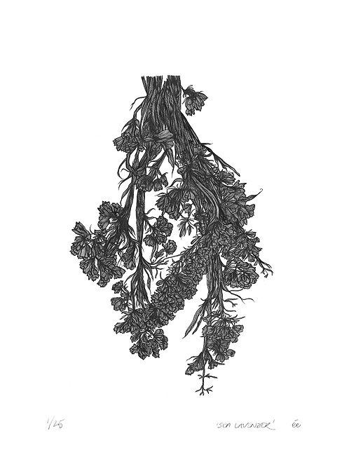 Limited Edition Botanical Print, 'Sea Lavender'