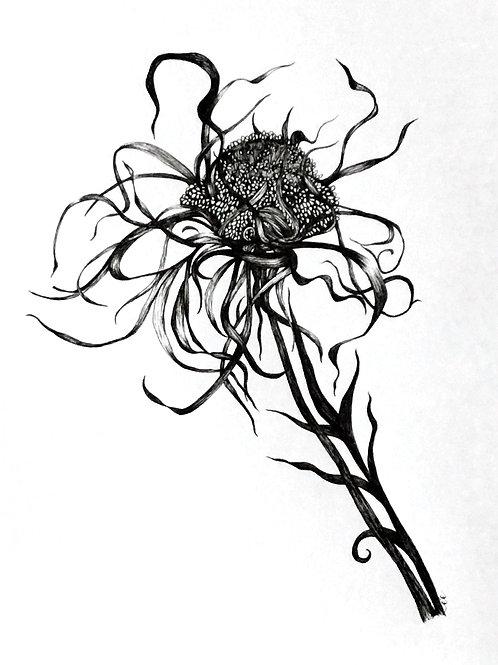 Original botanical ink study, no.i