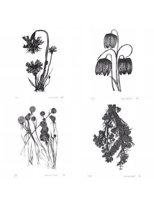 Limited Edition Botanical Prints, Collection of Four