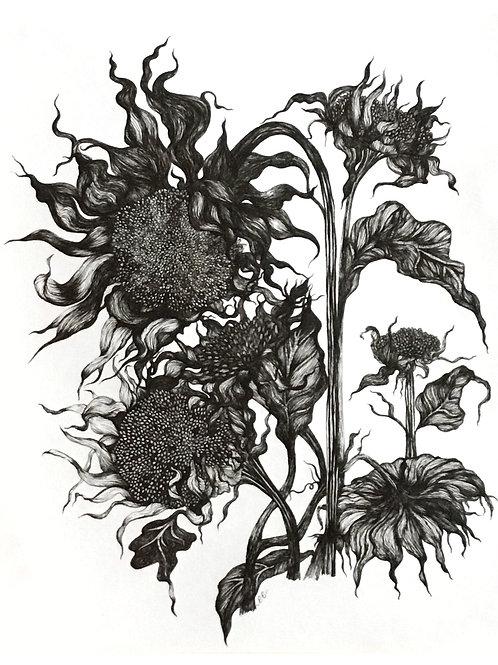 Original botanical ink study, no.ix