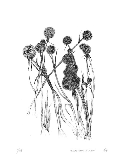 Limited Edition Botanical Print, 'Leeks Gone to Seed'