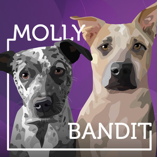 molly+bandit.jpg