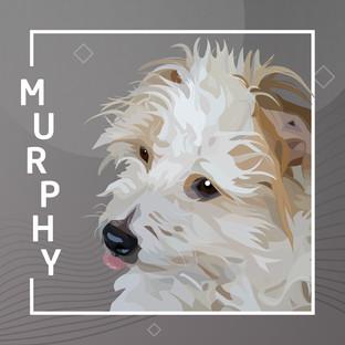 murphy_2.jpg