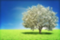 Accredited Investors Program Money Tree Image