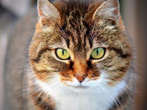 Sevimli Dostlarımız Kediler Hakkında Merak Edilenler