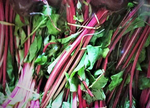 Plant de betterave rouge