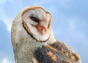 owl-3303542_1920.jpg