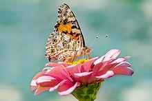 butterfly-4392735_1920.jpg