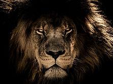 https___pixabay.com_de_photos_afrikanisc
