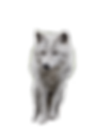 wolf-2104703_1920.png