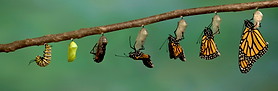 hero-butterfly-getty-images-1024x336.png