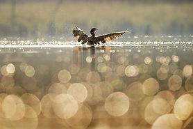 bird-1867066_1920.jpg