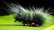 caterpillar-399164_1920.jpg
