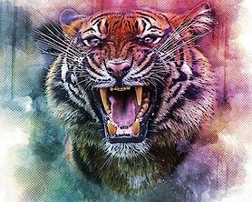 tiger-4843804_1920.jpg